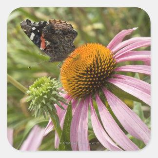 partnership, symbiotic, helping, beauty, square sticker