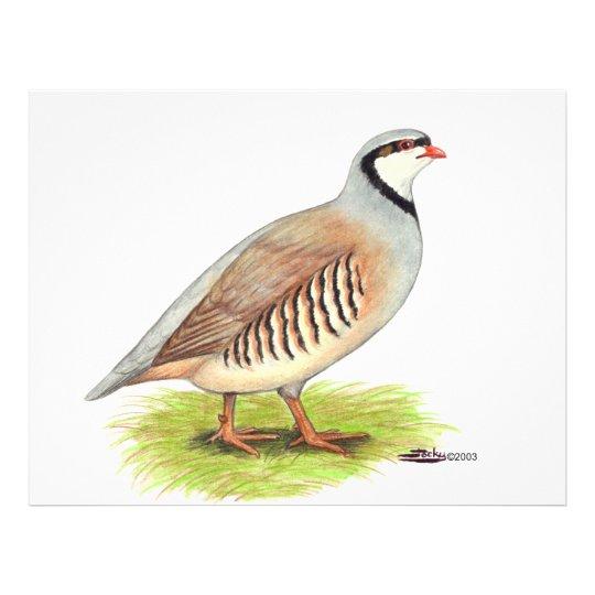 Partridge:  Chukar Flyer