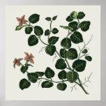 Partridgeberry Impresiones
