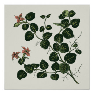 Partridgeberry Poster