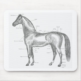 Parts of the Horse Mousepad