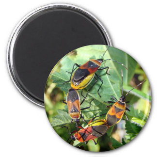 Party Bugs 2 Inch Round Magnet