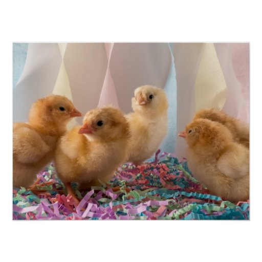Party Chicks Yellow Baby Chickens Streamers Poster