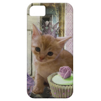 Party For One Kitten iPhone 5 case