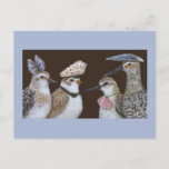 Partying Shorebirds postcard