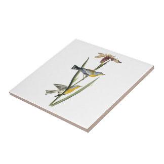 Parula septentrional por Audubon Azulejo Cuadrado Pequeño
