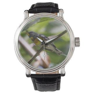 Parula septentrional reloj de mano
