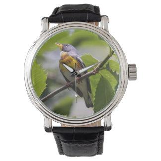 Parula septentrional relojes de pulsera