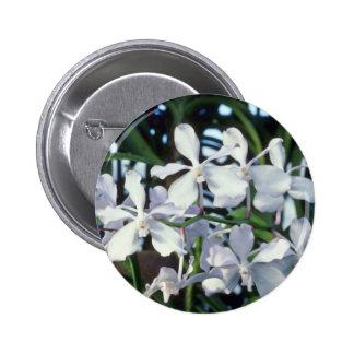 Parviflora (Vanda) flowers Pinback Buttons