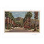 Pasadena, CA - Residental Street Scene & Palms Postcard
