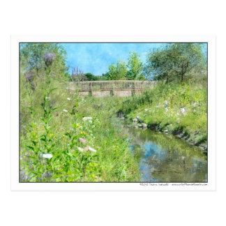 Pasarela de la acuarela sobre prado del Wildflower Tarjetas Postales