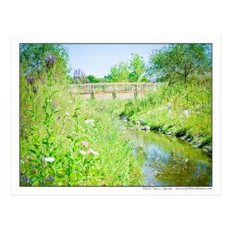 Pasarela sobre acuarela del prado del Wildflower Tarjeta Postal