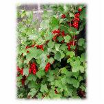 Pasas rojas en la planta. Hojas del verde Esculturas Fotográficas
