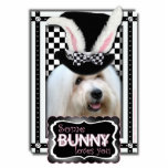 Pascua - algún conejito le ama - algodón de Tulear Esculturas Fotográficas