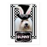 Pascua - algún conejito le ama - algodón de Tulear Postal