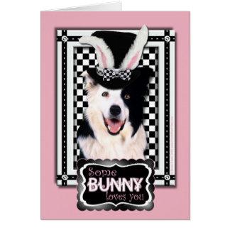 Pascua - algún conejito le ama - border collie tarjeta de felicitación