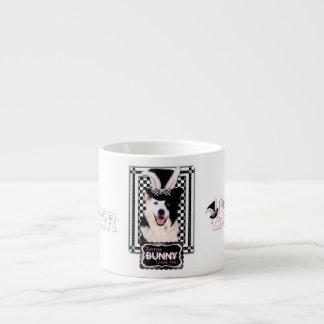 Pascua - algún conejito le ama - border collie tazita espresso