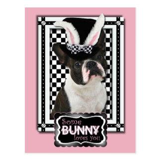 Pascua - algún conejito le ama - Boston Terrier Tarjeta Postal
