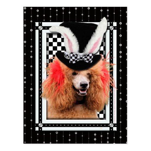 Pascua - algún conejito le ama - caniche - rojo tarjeta postal