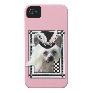 Pascua - algún conejito le ama - chino Crested iPhone 4 Coberturas