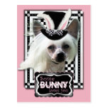 Pascua - algún conejito le ama - chino Crested Postal