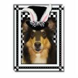 Pascua - algún conejito le ama - collie Caroline Escultura Fotográfica
