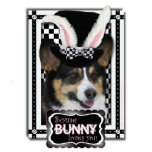 Pascua - algún conejito le ama - Corgi Escultura Fotografica