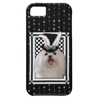 Pascua - algún conejito le ama - maltesa iPhone SE/5/5s case