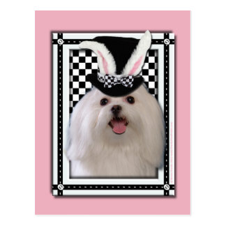 Pascua - algún conejito le ama - maltesa tarjeta postal