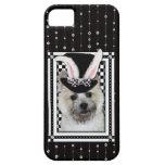 Pascua - algún conejito le ama - mojón Terrier iPhone 5 Cobertura