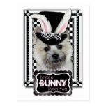 Pascua - algún conejito le ama - mojón Terrier Postal