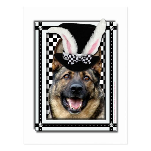 Pascua - algún conejito le ama - pastor alemán tarjeta postal