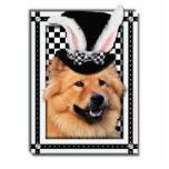 Pascua - algún conejito le ama - perro chino de pe escultura fotografica