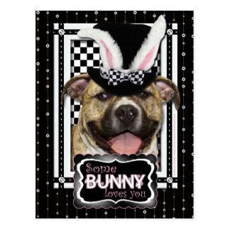 Pascua - algún conejito le ama - Pitbull Postal