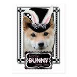 Pascua - algún conejito le ama - Shiba Inu Postal