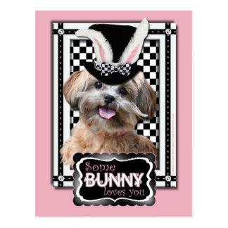 Pascua - algún conejito le ama - ShihPoo Tarjetas Postales