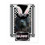 Pascua - algún conejito le ama - Terranova Postal