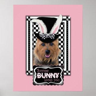 Pascua - algún conejito le ama - Terrier australia Posters