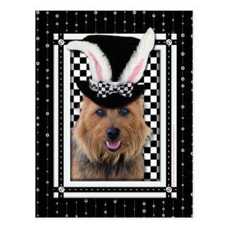Pascua - algún conejito le ama - Terrier Tarjetas Postales