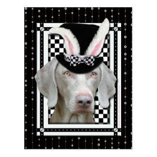 Pascua - algún conejito le ama - Weimaraner Tarjeta Postal