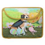 Pascua - beagle - Brady
