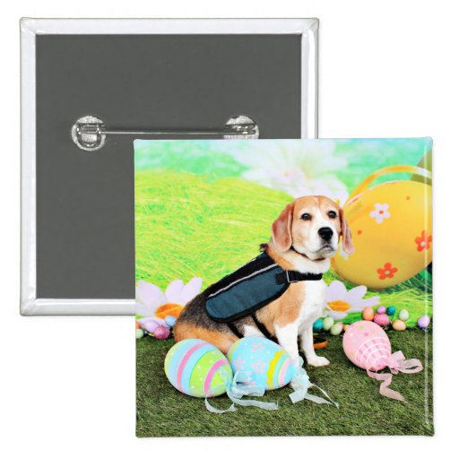 Pascua - beagle - Brady Pins