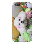 Pascua - Bichon Frise - Mia iPhone 5 Carcasas