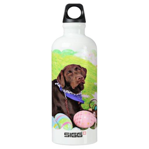 Pascua - chocolate Labrador - Hershey