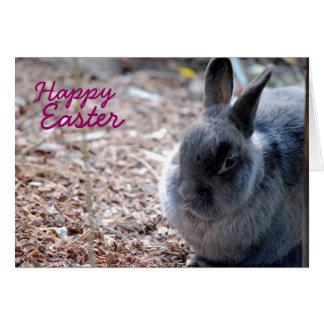 Pascua feliz - conejo gris tarjeta de felicitación