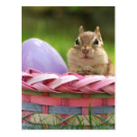 Pascua feliz poco Chipmunk 2 Tarjetas Postales