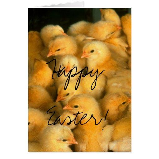 ¡Pascua feliz! Porciones de polluelos Tarjeta De Felicitación