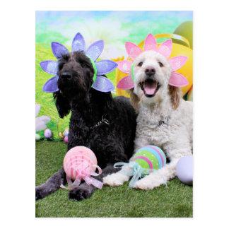Pascua - GoldenDoodles - Sadie e Izzie