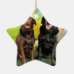 Pascua - Labrador - Jack y Diane