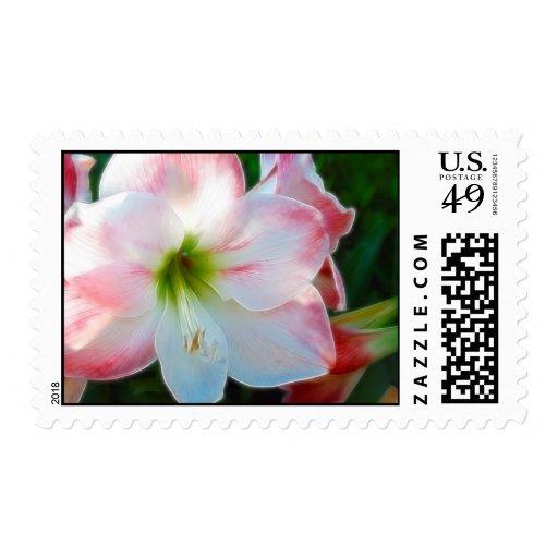 Pascua Lilly Timbre Postal